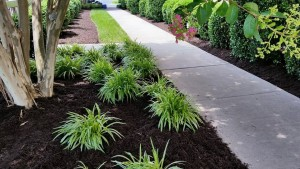 Chesterfield VA Lawn Care & Landscaping Spring Special | Picture Perfect Lawn Maintenance (804) 530-2540