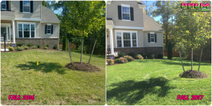 Picture Perfect Lawn Maintenance | 804-530-2540 | Before and After | one year of professional fertilization Richmond VA