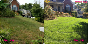 Picture Perfect Lawn Maintenance | 804-530-2540 | Before and After | best fertilization aeration seeding Moseley VA