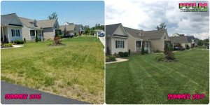 Picture Perfect Lawn Maintenance | 804-530-2540 | Before and After | healthy fescue lawn professional fertilization Chester Virginia