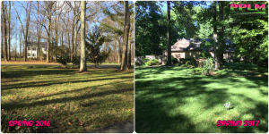 Picture Perfect Lawn Maintenance | 804-530-2540 | Before and After | successful fertilizing soil evaluation healthy grass Chesterfield VA