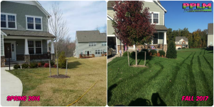 Picture Perfect Lawn Maintenance | 804-530-2540 | Before and After | professional fertilization aeration seeding difference Midlothian VA