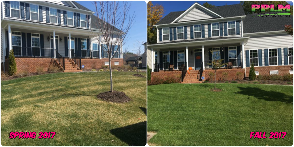 Birkdale Lawn Care Fertilization Weed Control​ | Picture Perfect Lawn Maintenance | (804) 530-2540