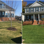Birkdale Lawn Care Fertilization Weed Control​