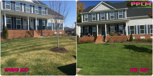 Picture Perfect Lawn Maintenance | 804-530-2540 | Before and After | healthy lawn professional fertilizing Moseley VA