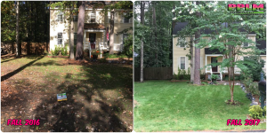 Picture Perfect Lawn Maintenance | 804-530-2540 | Before and After | one year difference seeding custom fertilization best service Midlothian VA