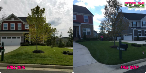 Beckenham Lawn Care Fertilization Weed Control by Picture Perfect Lawn Maintenance | (804) 530-2540