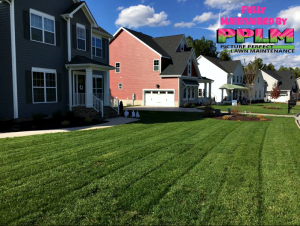 Rivers Bend VA Lawn Care Fertilization Weed Control by Picture Perfect Lawn Maintenance | (804) 215-1266
