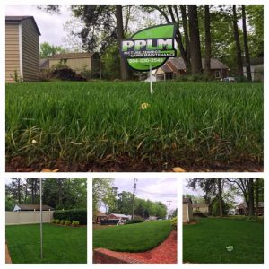 Westerleigh Lawn Aeration Seeding Fertilization Service by Picture Perfect Lawn Maintenance (804) 530-2540