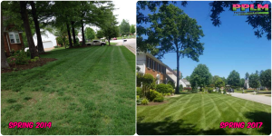 Picture Perfect Lawn Maintenance | 804-530-2540 | lawn improvement high quality fertilizer professional mowing Chesterfield VA