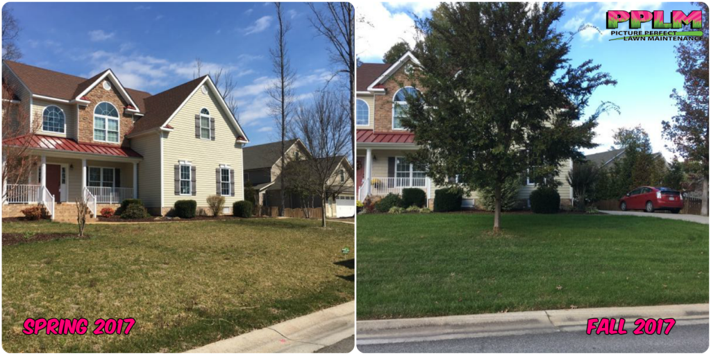 Birkdale Lawn Care Fertilization Weed Control​ by Picture Perfect Lawn Maintenance | (804) 530-2540