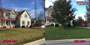 Picture Perfect Lawn Maintenance | 804-530-2540 | organic fertilization lawn care Chesterfield VA