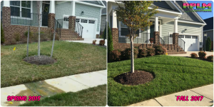 Picture Perfect Lawn Maintenance | 804-530-2540 | Before and After | turf type tall fescue care company Richmond VA
