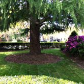 Picture Perfect Lawn Maintenance | 804-530-2540 | quality full service landscape care mowing pruning mulching fertilizer Virginia Beach