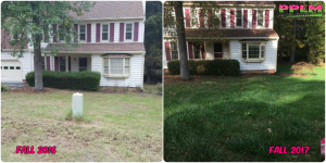 Picture Perfect Lawn Maintenance | 804-530-2540 | Before and After | professional difference seeding fertilizing company Chesterfield VA