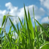 Hampton Farms Lawn Aeration Seeding Fertilization by Picture Perfect Lawn Maintenance (804) 530-2540