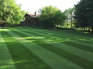 Summerford Lawn Aeration Seeding Fertilization by Picture Perfect Lawn Maintenance | (804) 530-2540