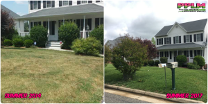 Picture Perfect Lawn Maintenance | 804-530-2540 | Before and After | great yard service corrective organic fertilization company Chester VA