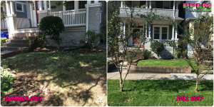 Picture Perfect Lawn Maintenance | 804-530-2540 | Before and After | best full service lawn care professional company organic fertilization aeration seeding mowing pruning Virginia Beach Norfolk
