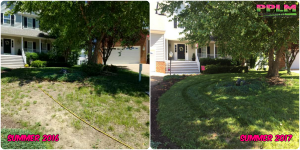 Picture Perfect Lawn Maintenance | 804-530-2540 | Before and After | corrective professional organic fertilization program Chesterfield VA