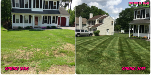 Picture Perfect Lawn Maintenance | 804-530-2540 | Before and After | healthy thick turf fertilization service Richmond VA