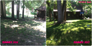 Picture Perfect Lawn Maintenance | 804-530-2540 | Before and After | professional shade fescue seeding fertilizing Chester VA