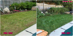 Picture Perfect Lawn Maintenance | 804-530-2540 | Before and After | professional difference grass improvement fertilizer program Moseley VA