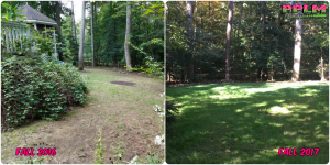 Picture Perfect Lawn Maintenance | 804-530-2540 | Before and After | healthy thick fescue yard fertilization aeration seeding company Chesterfield VA