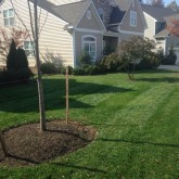 Mowing Fertilizer and Mulching by Picture Perfect Lawn Maintenance Chesterfield VA (804) 530-2540