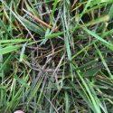 Fall Lawn Fungus